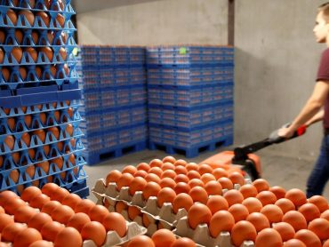 Video: SAG INFORMA: Primera guía sobre bienestar animal en producción de huevos