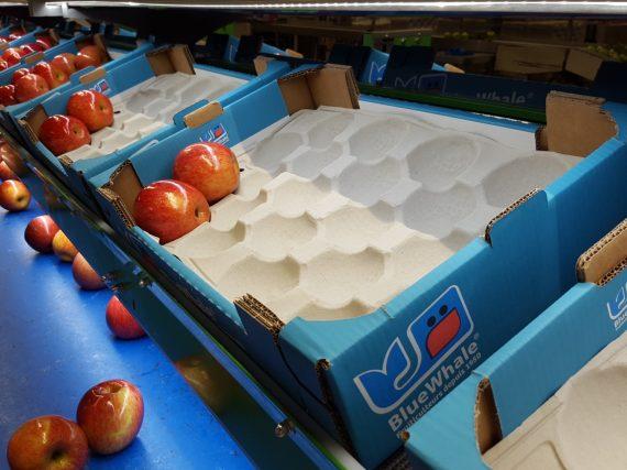 Exportaciones de manzanas chilenas superan los envíos de uva de mesa en temporada 2017-2018