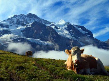 El frigoríficos de Hughes exportará carne con hueso a China