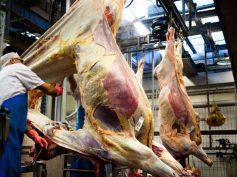 «El número de empresas certificadas Halal en Grecia está creciendo» – EXCLUSIVO
