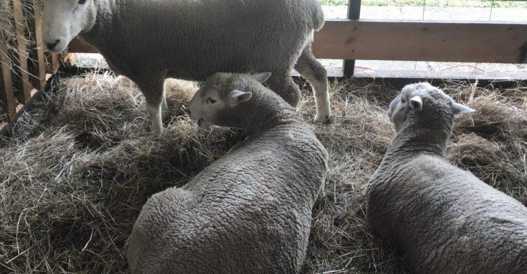 Declaración de Existencia Animal ahora será obligatoria para la región de Aysén