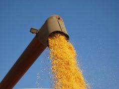 Chile con un complicado inicio de la cosecha del maíz