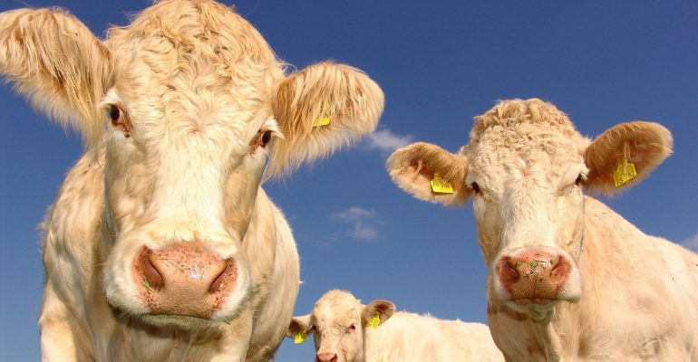 La carne halal no puede ser certificada como orgánica según la legislación de la UE