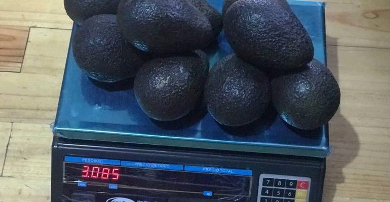 Palta Hass peruana logra ingreso al mercado de Tailandia