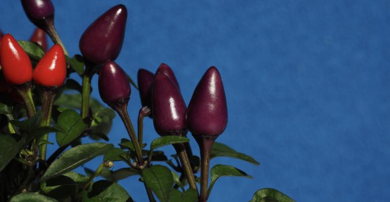 NASA revela primera fruta que se cultivará en la estación espacial internacional