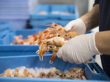 Cómo comer marisco en verano sin riesgos