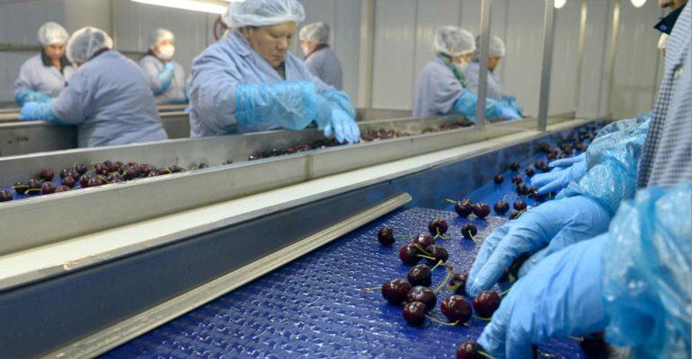 Turquía: aumentan exportaciones de cerezas a China