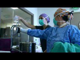 El papel clave de los veterinarios durante la crisis del coronavirus