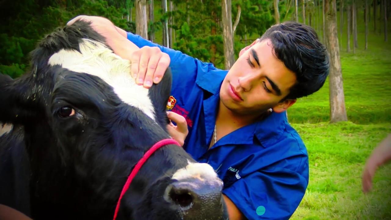 El veterinario, clave en la promoción del bienestar animal